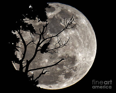Photograph - A Hunters Moon Two by Ken Frischkorn