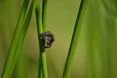 Photograph - A Jumper In The Grass by JD Grimes