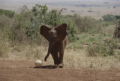 Nairobi Photograph - A Juvenile Elephant Loxodonta Africana by Michael S. Lewis