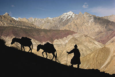 Pause Photograph - A Ladakhi And Pack Donkeys Pause by