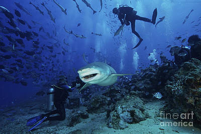 Videographer Photograph - A Large Lemon Shark Gulps Down A Large by Terry Moore