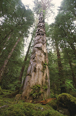 A Large Totem Pole Stands Amid Tall Art Print by Bill Curtsinger