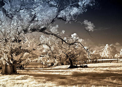Australia Digital Art - A Little Bit Country 2 by Heather Thorning
