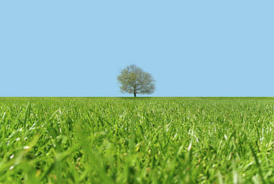 Focus On Background Photograph - A Lone Tree In A Field by Richard Newstead