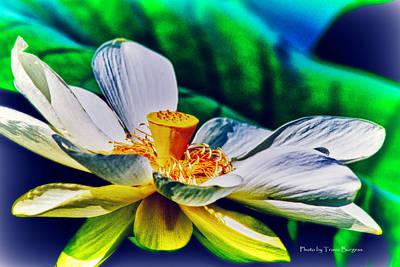 A Lotus Brightly Art Print by Travis Burgess