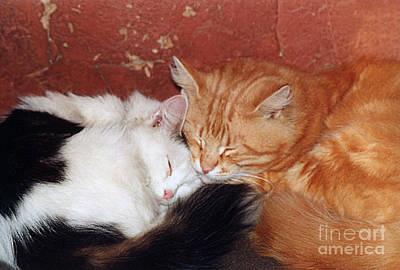 Photograph - A Loving Couple- Pandute And Liutukas by Ausra Huntington nee Paulauskaite