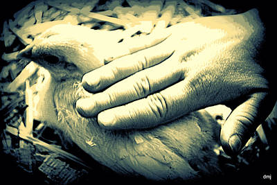 Photograph - A Loving Hand by Diane montana Jansson