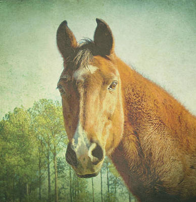 Art Print featuring the photograph A Loving Soul by Robin Dickinson