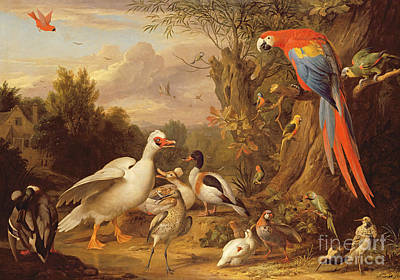 Macaw Wall Art - Photograph - A Macaw - Ducks - Parrots And Other Birds In A Landscape by Jakob Bogdani