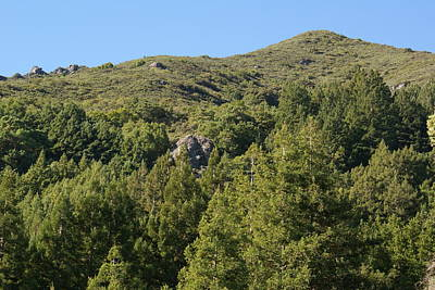 Photograph - A Majestic Grove Of Redwoods Surround My Favorite Rock On Mt Tamalpais by Ben Upham III