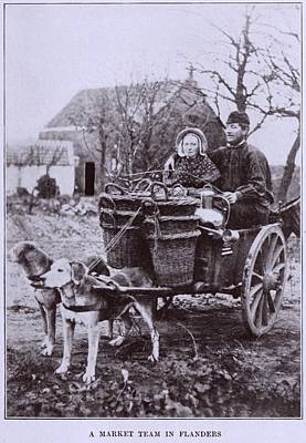 A Market Team In Flanders. Two Dogs Art Print by Everett