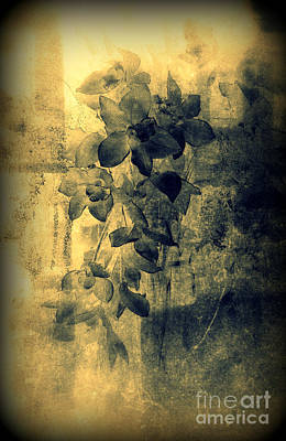 Avantgarde Photograph - A Medley Of Orchids by Susanne Van Hulst
