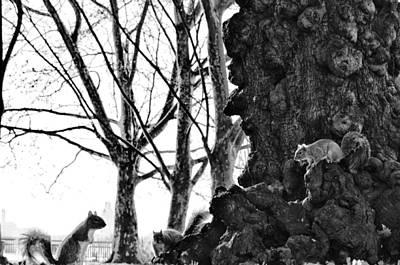 Squirrel Digital Art - A Meeting Of Squirrels by Bill Cannon