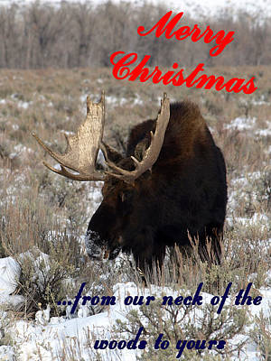 Photograph - A Moose Christmas Wish by DeeLon Merritt