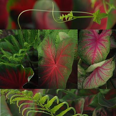 A Mosaic Of Red And Green Calladium Leaves Art Print