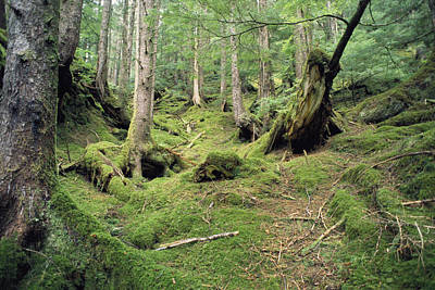 Queen Charlotte Islands Photograph - A Mossy Woodland View On Queen by Bill Curtsinger
