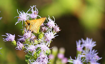 Photograph - A Moth Of Gold by Roena King