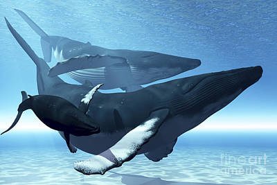 A Mother Humpback Whale Is Escorted Art Print by Corey Ford