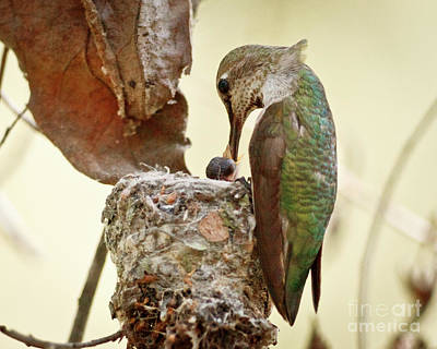 Nature Nesting Photograph - A Mother's Love by Carl Jackson