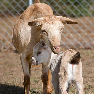 Photograph - A Mother's Love by Gwen Vann-Horn