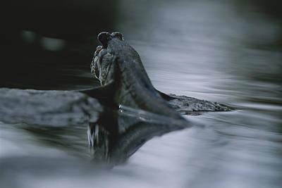 Gabon Photograph - A Mudskipper Fish Propels Itself by Michael Nichols