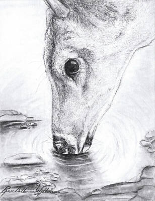 Whitetail Deer Drawing - A Needed Drink by Renee Catherine Wittmann