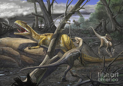 A Neovenator Salerii Is Approached Art Print by Sergey Krasovskiy