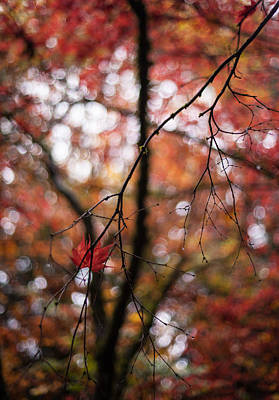 Red Leaves Photograph - A Pair by Mike Reid