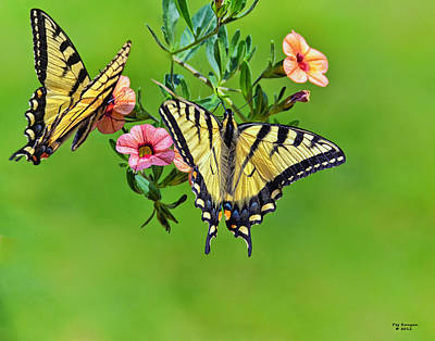 Photograph - A Pair Of Butterflys by Peg Runyan