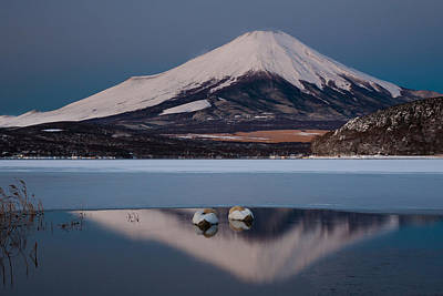 A Pair Of Mute Swans In Lake Kawaguchi In The Reflection Of Mt Fuji, Japan Print by Mint Images/ Art Wolfe