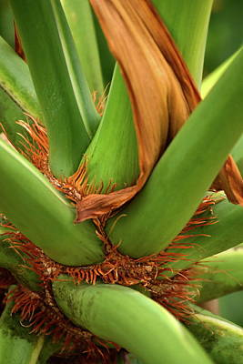 Photograph - A Palmetto's Elbows by JD Grimes