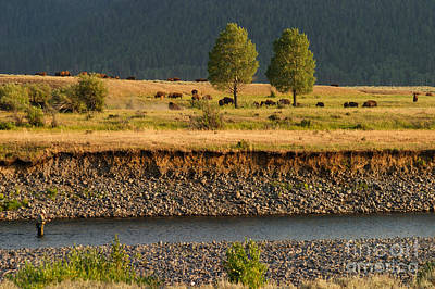Yellowstone Photograph - A Peaceful Moment On The Lamar River by Charles Kozierok