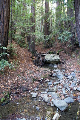 Photograph - A Peaceful Redwood Creek On Mt Tamalpais by Ben Upham III