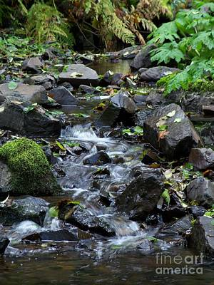 Photograph - A Peaceful Stream by Chalet Roome-Rigdon