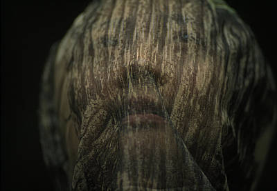 Obscured Face Photograph - A Person Wearing Camouflaging Mosquito by Joel Sartore