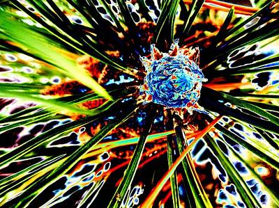 Photograph - A Piney Abstract by Beth Akerman