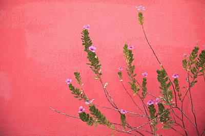A Pink Flowering Plant Growing Beside A Art Print by Stuart Westmorland