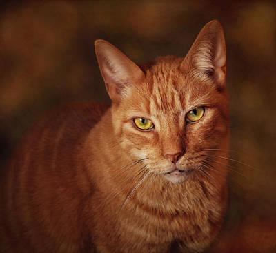 Photograph - A Portrait Of Pete by Pat Abbott