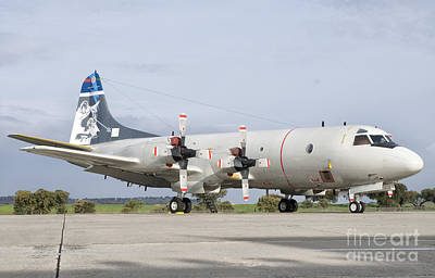 Foreign Military Photograph - A Portuguese Air Force P-3c Cup Orion by Giovanni Colla