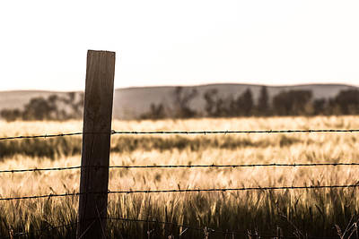 Photograph - A Post And Barbed Wire by Chris Fullmer