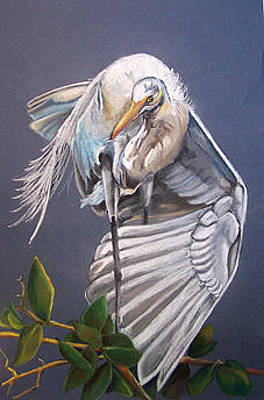 Painting - A Preening Great Egret by Teresa Smith