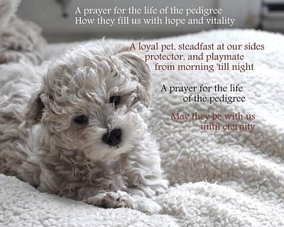 A Puppy's Prayer Art Print