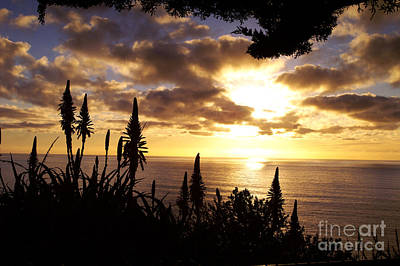Photograph - A Ragged Point Sunset by Gary Brandes