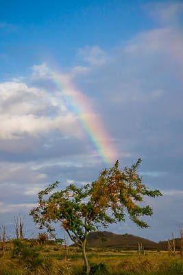 Photograph - A Rainbow And The Rainbow Shower Tree by Roger Mullenhour