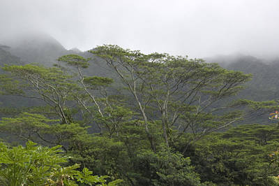 Manoa Falls Photograph - A Rainforest In Honolulu, Hawaii by Stacy Gold