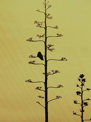 A Raven's Rest Art Print by James Mancini Heath