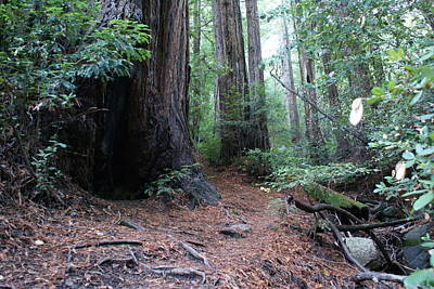 Photograph - A Redwood Forest Trail On Mt Tamalpais by Ben Upham III