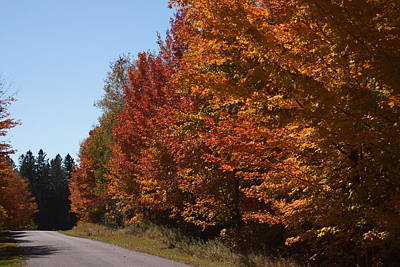 Photograph - A Road In Autumn by Ron Read