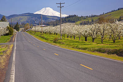 A Road Leading Toward Mount Hood In Columbia River Gorge Art Print by Design Pics / Craig Tuttle