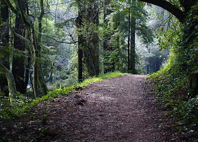 Photograph - A Road Through A Redwood Forest On Mt Tamalpais by Ben Upham III